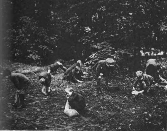 12_Deutsch-Amerika_08_1922_Nr44_p09_Eicheln_Kinder_Tiergarten