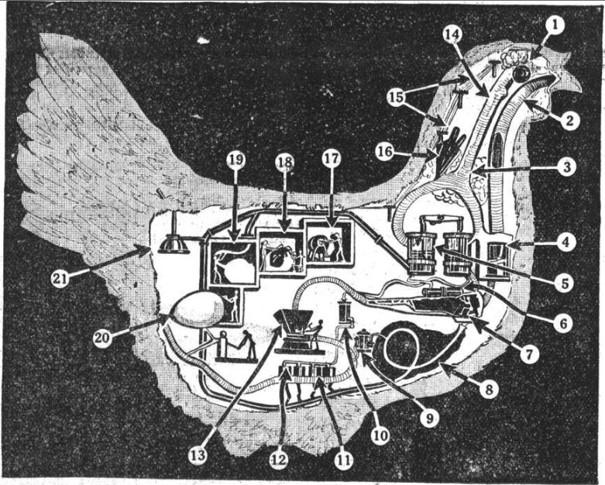 08_Illustrierter Sonntag_1930_12_14_Nr50_p8_Huhn_Maschinenmetapher_Eierproduktion_Schaubild