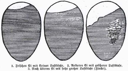 12_Landfrau_1929_Nr18_p7_Eier_Alter_Schaubild
