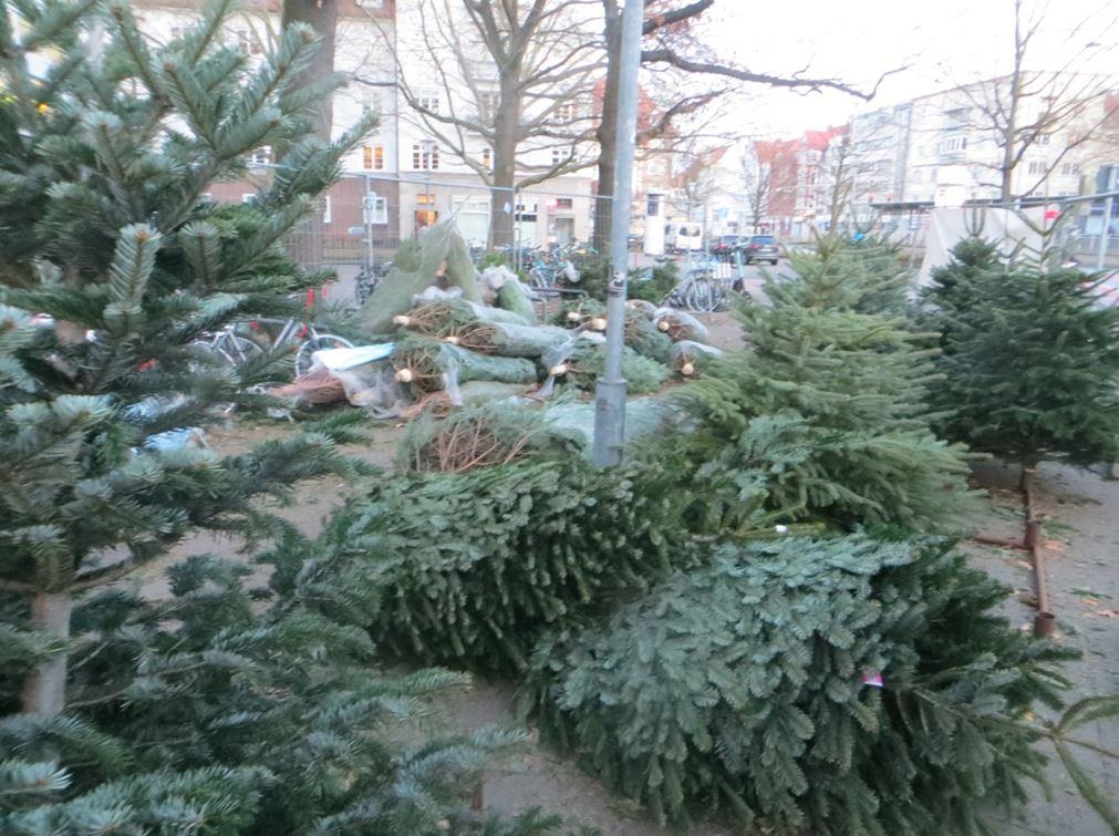 17_Uwe Spiekermann_Weihnachten_Weihnachtsbäume