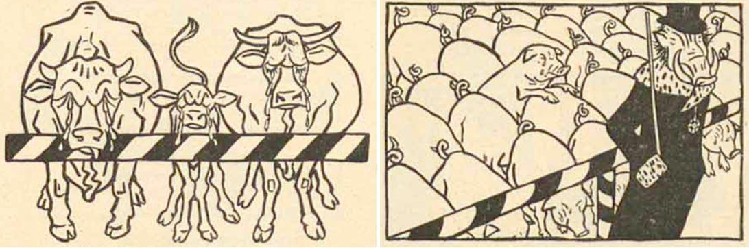 13_Simplicissimus_10_1905_Nr55_p1_Fleischversorgung_Schutzzoll_Fleischnot_Fleischteuerung_Schweine_Rinder