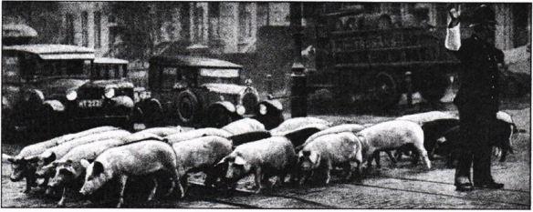 21_Zeitschrifft fuer Fleisch- und Milchhygiene_42_1931-32_p064_Schweine_Magerschweine_Großbritannien_London