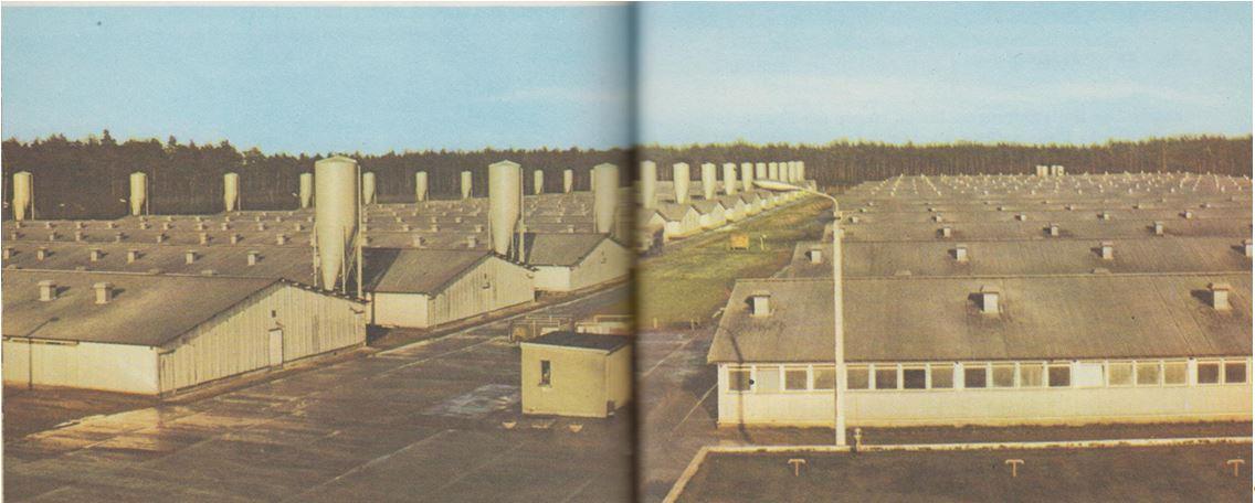 23_Mothes_1976_p84-85_Fleischindustrie_Schweinemast_DDR